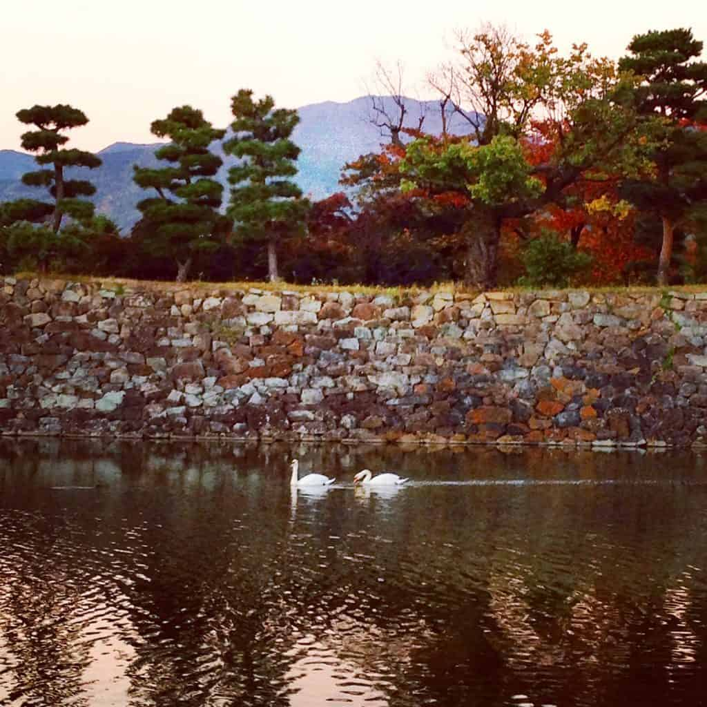 Swans at Matsumoto Castle